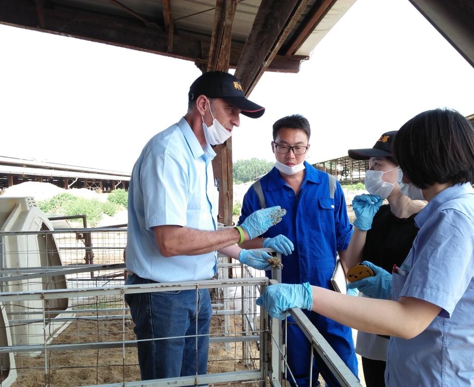 红星牧场犊牛培育交流